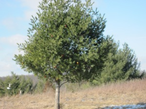 Christmas tree in the middle of nowhere.